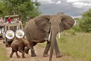 A family of elephants crossing the road