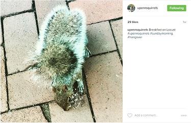 upennsquirrels1